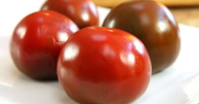 Как хранить помидоры, чтобы они дольше не вяли