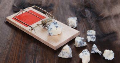Безопасен ли голубой сыр (с плесенью) и можно ли его сделать дома