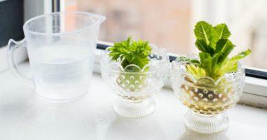 10 овощей, из которых можно вырастить зелень дома